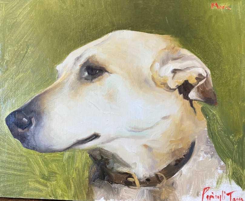 Costanza Fine Art dog portrait