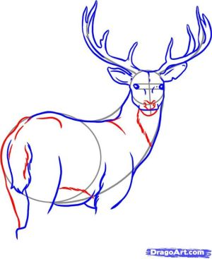 draw drawing deer step dragoart drawings tailed buck easy sketches animals pencil animal sketch tutorials cerf whitetail head learn things