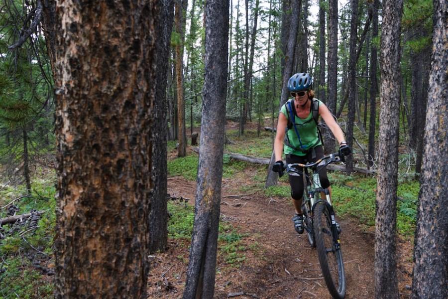 Mt. McIntyre Trails