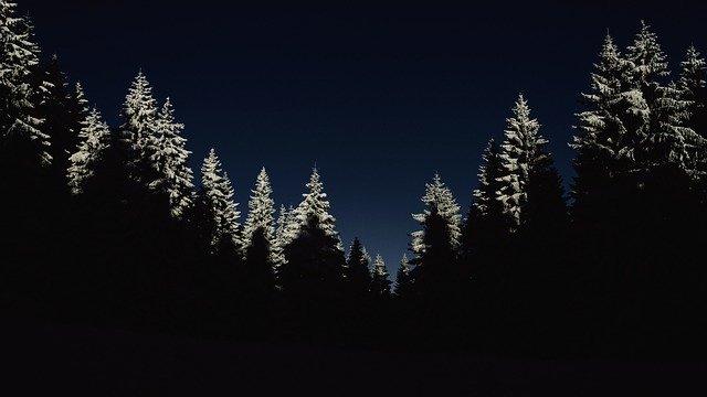 Black forests