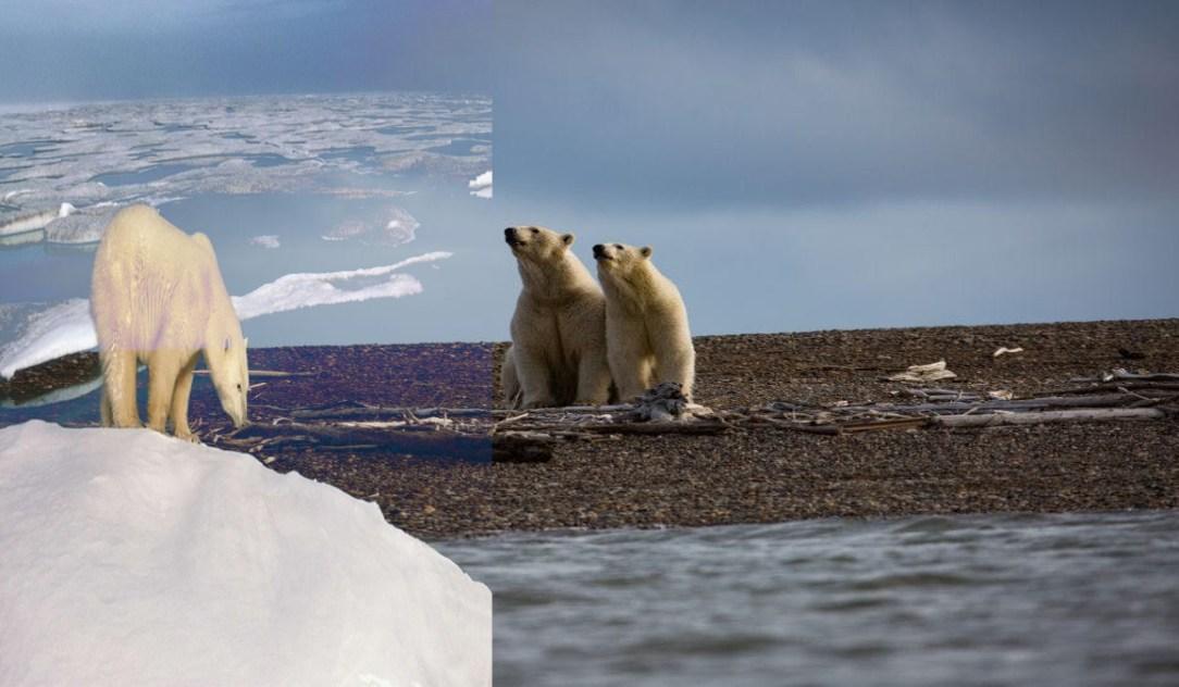 Oil Drilling In Alaska Wildlife Refuge
