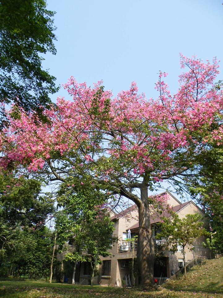 花樹下:你的本命樹最近澆水了嗎?