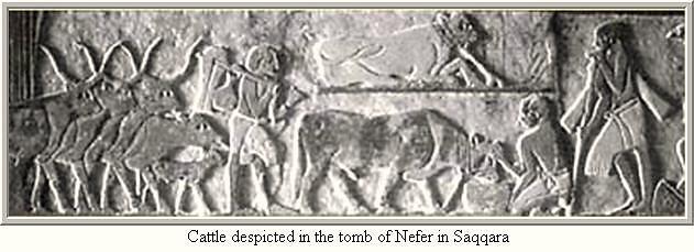 kahun papyrus - pic1 - vet wall art