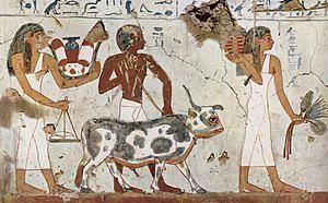 kahun papyrus - pic4 - vet painting