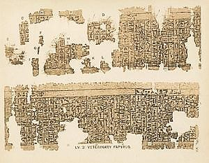 kahun papyrus - pic6 - fragments of