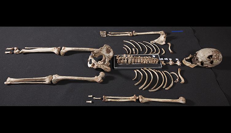 Reassembled skeleton of Cheddar Man