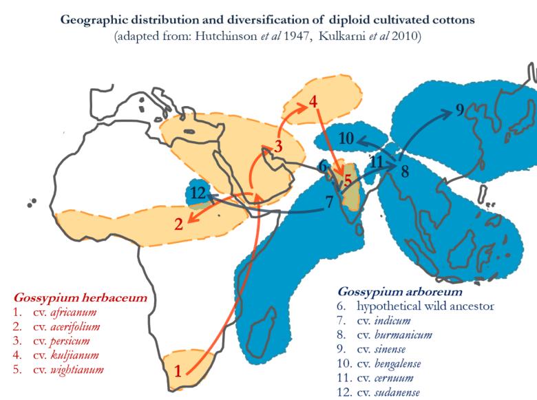 https://i1.wp.com/thinkafrica.net/wp-content/uploads/2019/01/cotton-pic8.png?resize=780%2C581&ssl=1