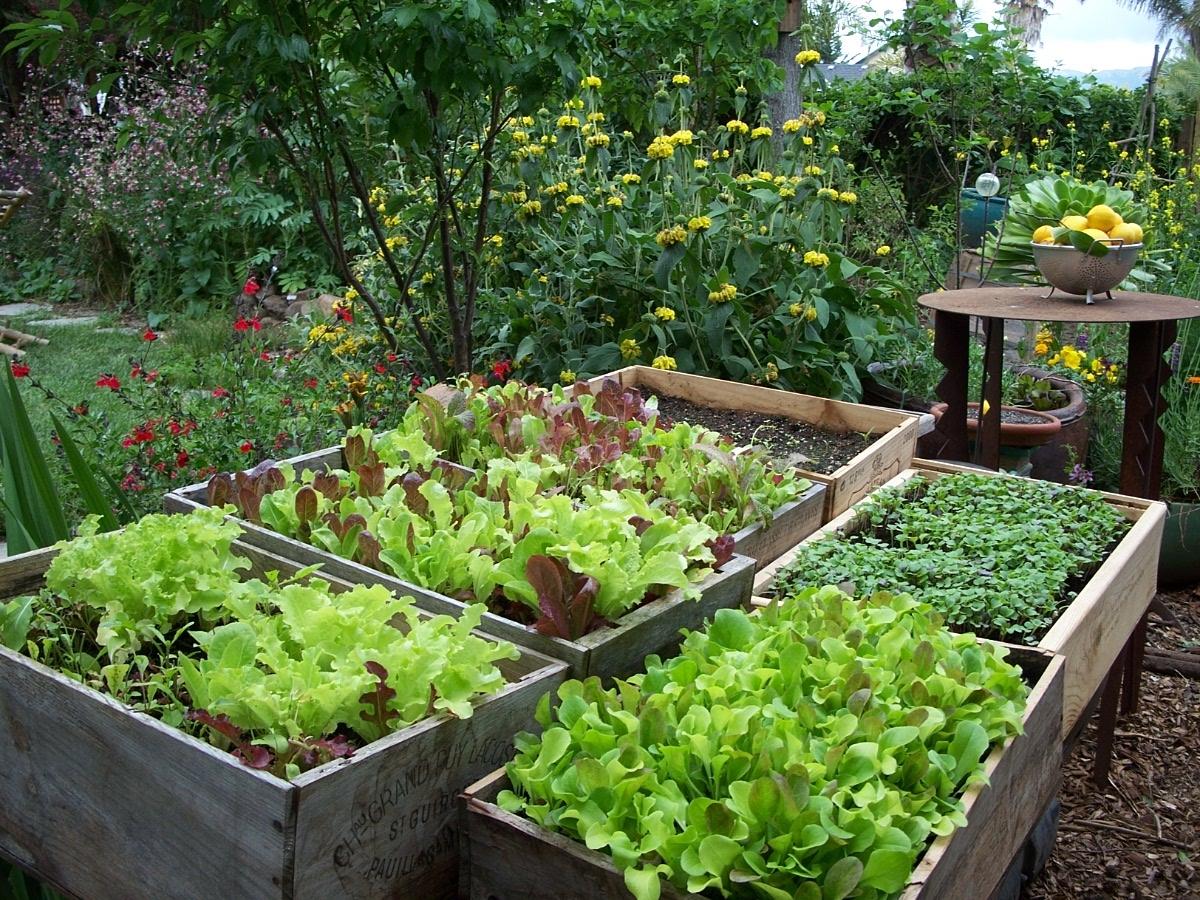 How To Plan Your Edible Garden Move In Saigon Apartment And