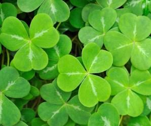 How the Irish Got Saved