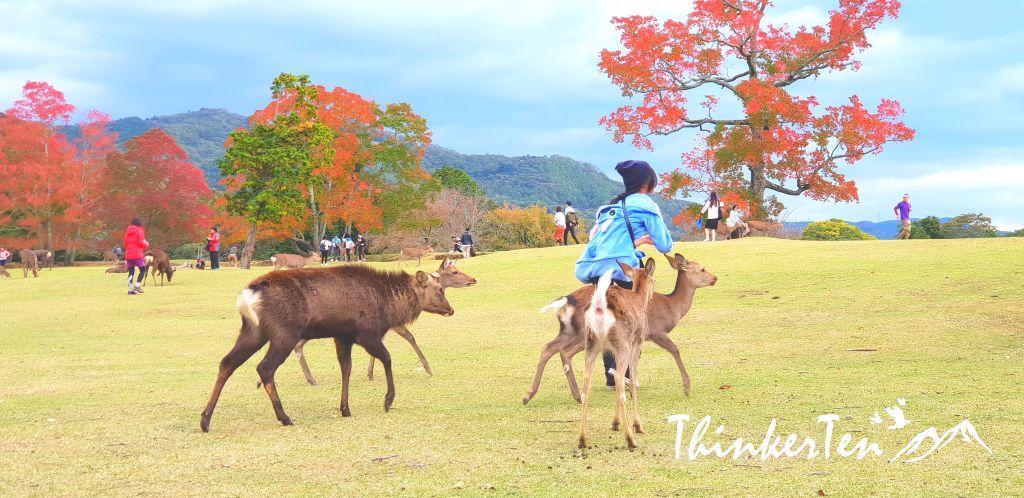 The Bowing Deer at Nara - Top 14 Things you need to know before you visit Nara Park!