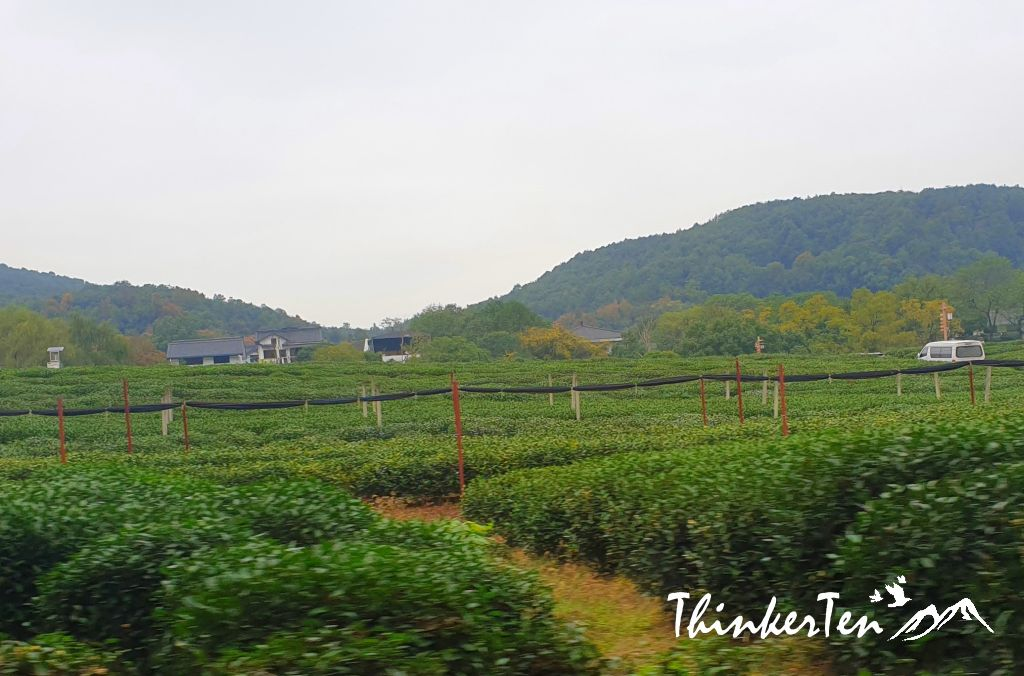 Longjing Tea Village in Hangzhou
