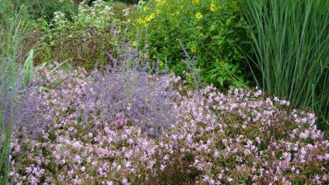 Sussex Prairie Garden 2 copyright Darryl Moore