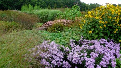 Sussex Prairie Garden 4 copyright Darryl Moore