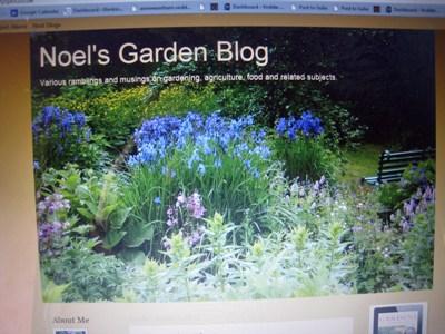 Noel's Blog 1 copyright Anne Wareham