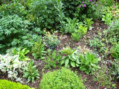 Bare soil and random planting. Kiftsgate. Copyright Anne Wareham for thinkingardens