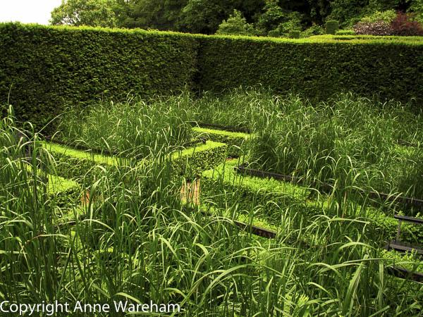 Cornfield garden, Veddw