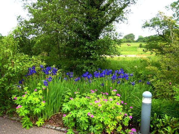 National Botanic Garden of Wales, Copyright Anne Wareham for thinkingardens