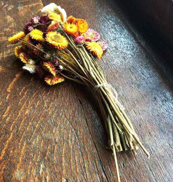 Dixter dried flowers copyright Robin White FS