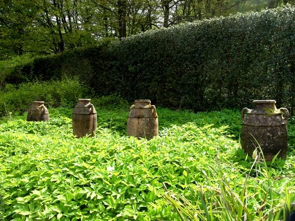 Pots in ground elder at Veddw Copyright Anne Wareham 245