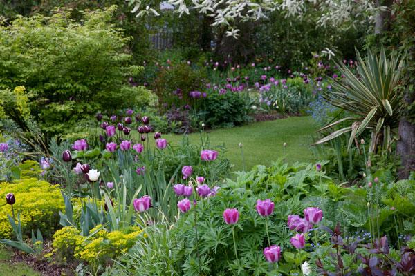 TG-pink-tulips4193