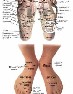 Vitaflex foot chart also just  drop natural healing with essential oils the thinking moms rh thinkingmomsrevolution