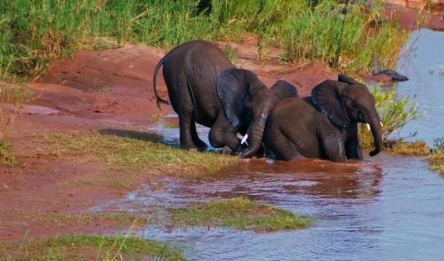 Chobe National Park, Botswana, (Acacia Africa)