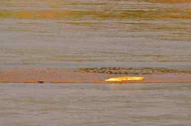 Crocodile - Samburu, Kenya