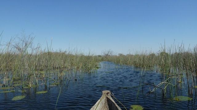 Okavango Delta, Botswana (Toni White)