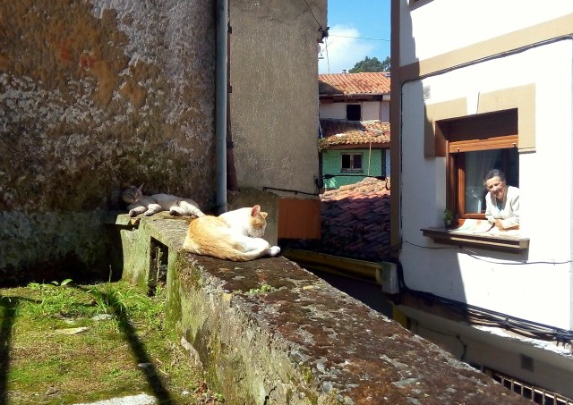 Locals and their cats in Cudillero