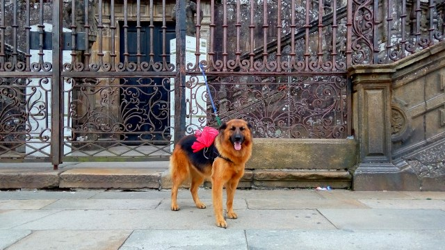 Some people walk the Camino de Santiago with their dog - and take pictures of them along the way!