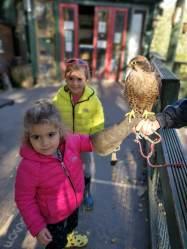 Owl Sanctuary Festival Park Ebbw Vale