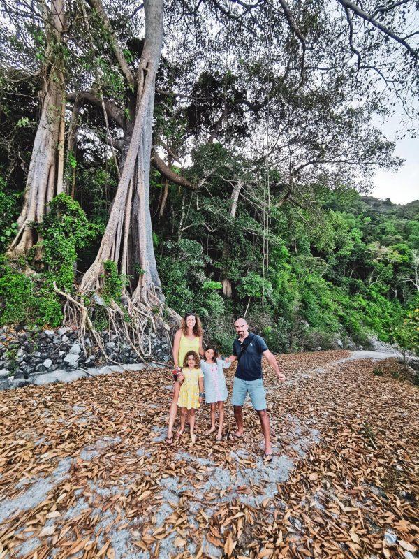 Cham Islands with Children banyard tree