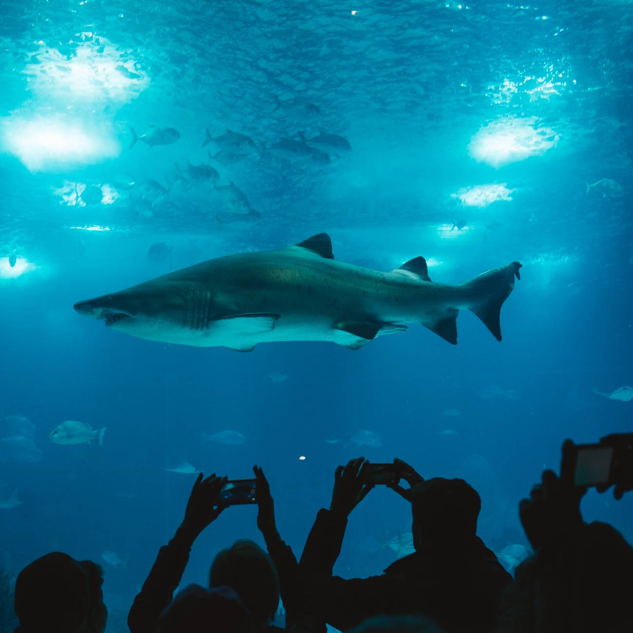 group of people taking picture of shark at London Sea Life Aquarium
