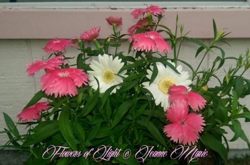 Flowers of Light~Jeanne Marie (11 of 28)
