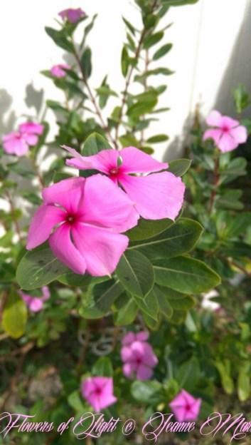 Flowers of Light~Jeanne Marie (22 of 28)