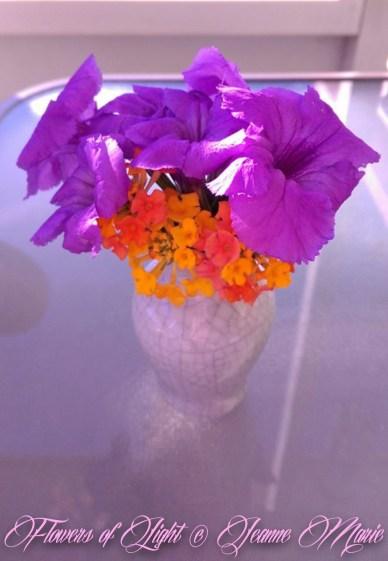 Flowers of Light~Jeanne Marie (26 of 28)
