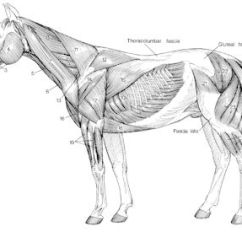 Horse Anatomy Diagram Muscles Bosch 12 Volt Relay Wiring Pictures Think Like A Rick Gore Horsemanship