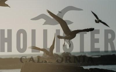 Hollister Flies Seagulls to the Coast