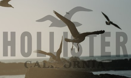 Hollister Flies Seagulls to the Coast