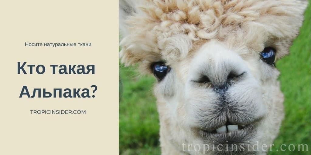 Кто такая альпака?