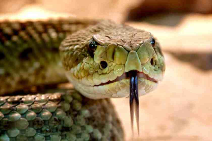 animal dangerous evil 38438_result