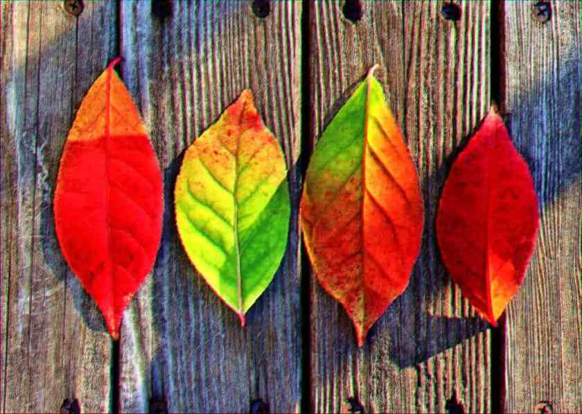autumn colorful colors 33158_result