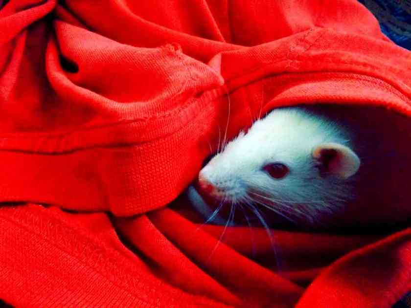 animal cloth cute 154177_result