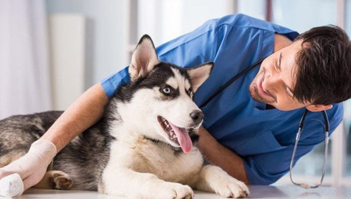 Vet where care your dogs