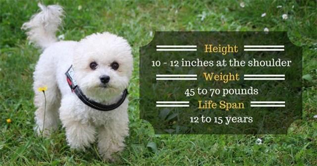 3rd position is Miniature Poodle