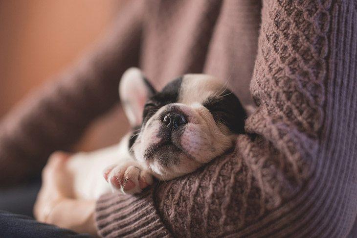 How Many Hours A Day Do Dogs Sleep