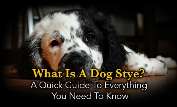 What Is A Dog Stye Quick Guide To Everything You Need Know Lump By His Eye Boxer