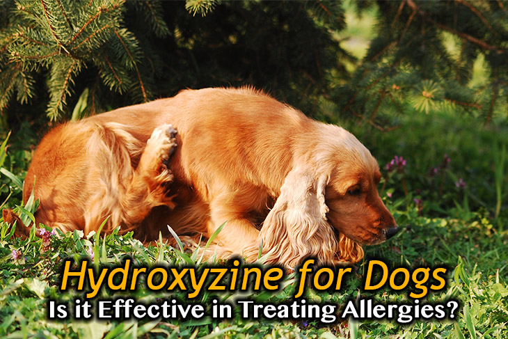 Hydroxyzine For Dogs: Is It Effective In Treating Allergies
