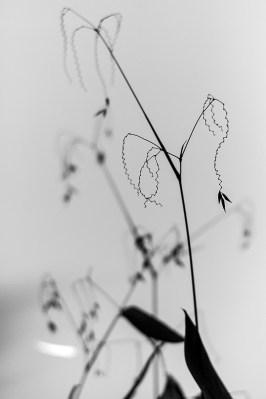 botanic garden, zig-zag