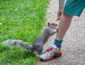 greenwich - squirrel and boy 001